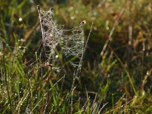 Spinnenweben im Gras