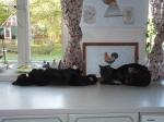 Die Katzen liegen lieber auf der Heizung