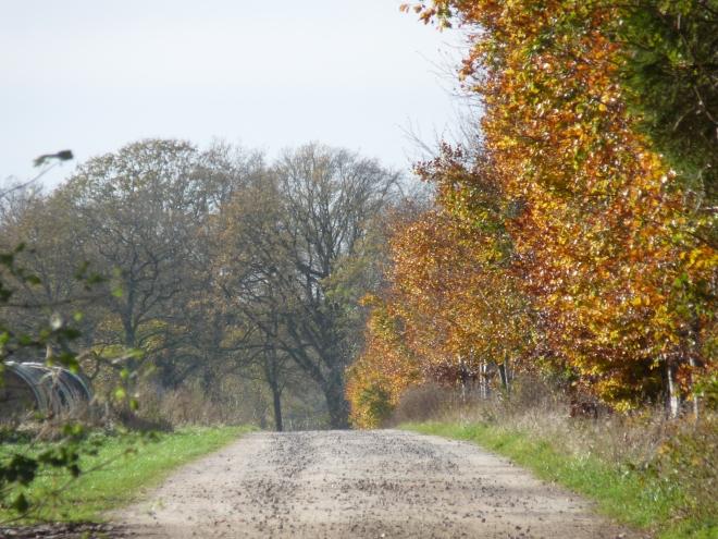 Weg zum Kuhbach