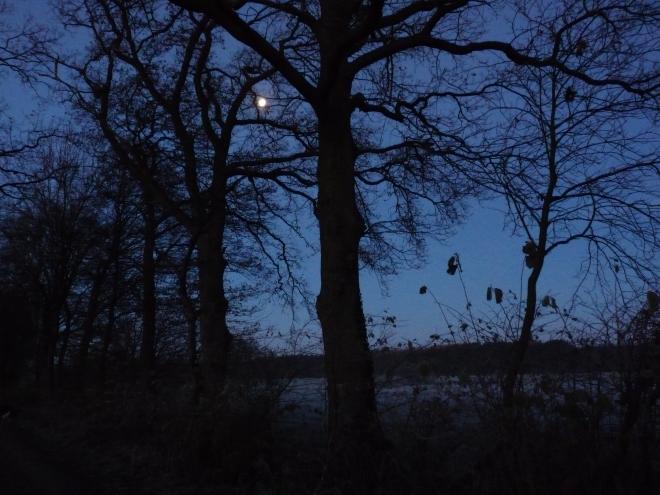 Mond bei Spaziergang
