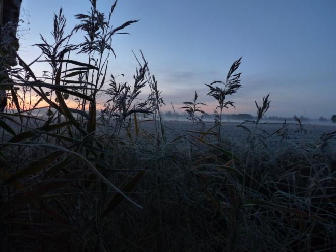 Gräser im Sonnenaufgang