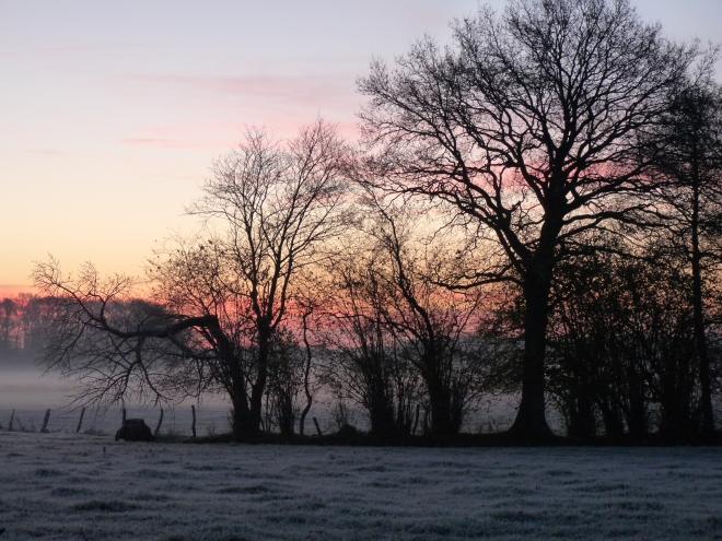 Bäume Sonnenaufgang