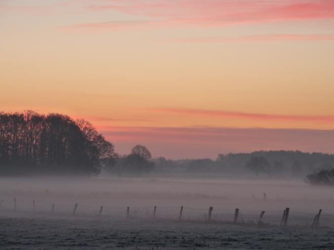 Weide Nebel1