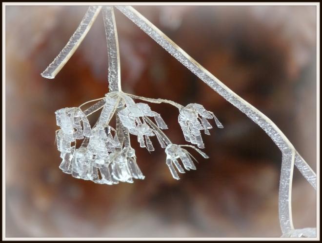 Kristalls