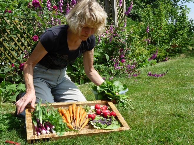 Mit der Gemüseernte