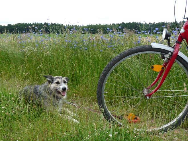 Greta am Fahrrad