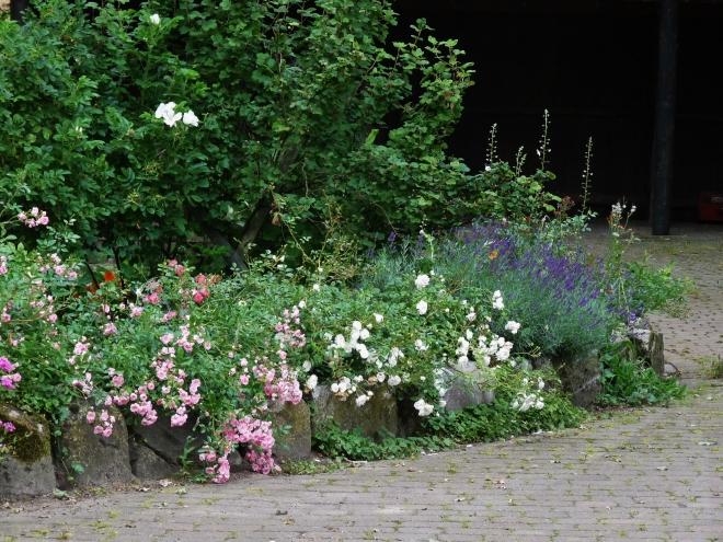Lavendel am Wall