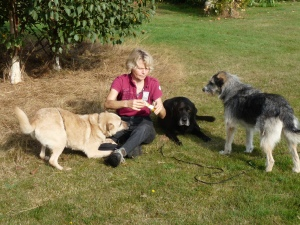 Hunde bekommen Leckerlies