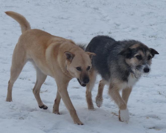 Greta und Paco