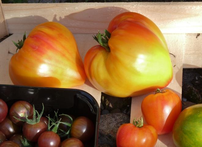Tomatenauswahl