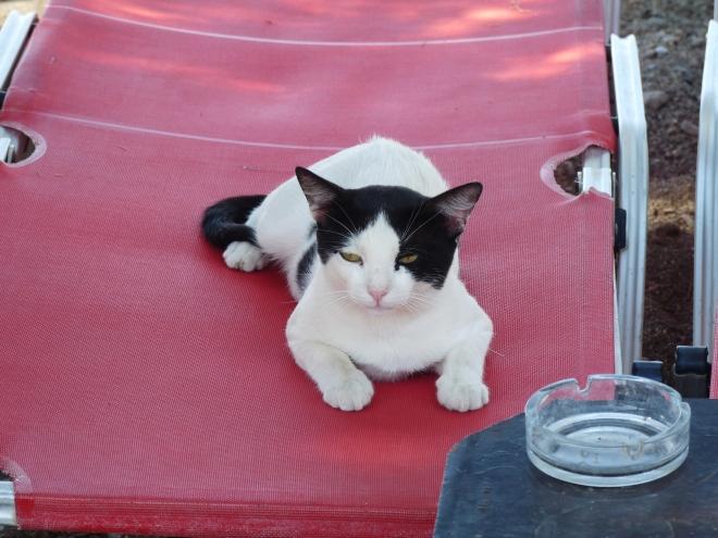 Katze auf Liegestuhl