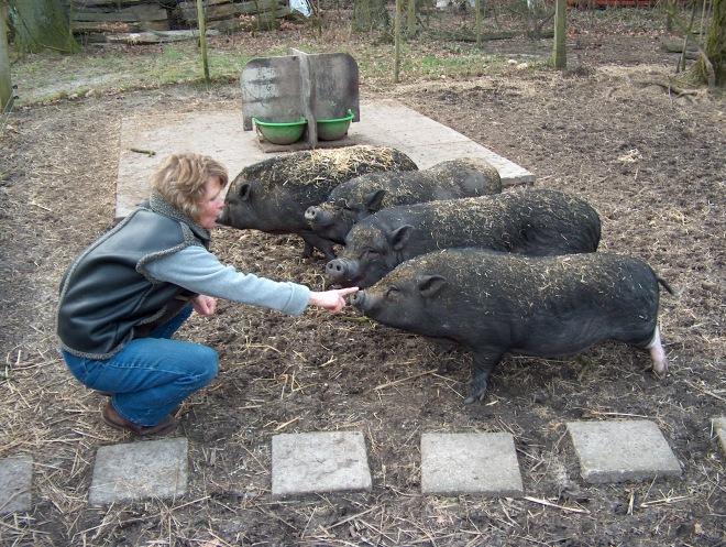 4 Schweine und ich