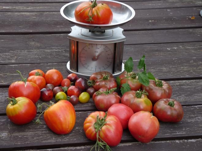 Tomaten an der Waage