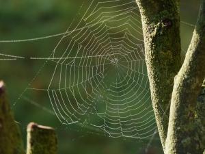 Spinnenetz nah