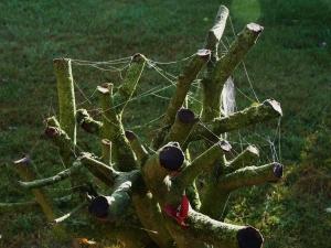 Spinnennetz im Baum