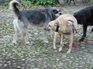 die drei Hunde