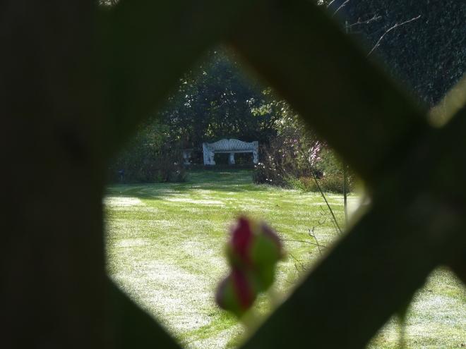 Rose Falstaff mit weißer Bank