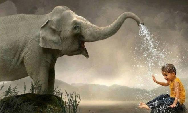 Elefant wasser
