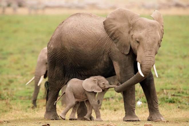 elefanten happy