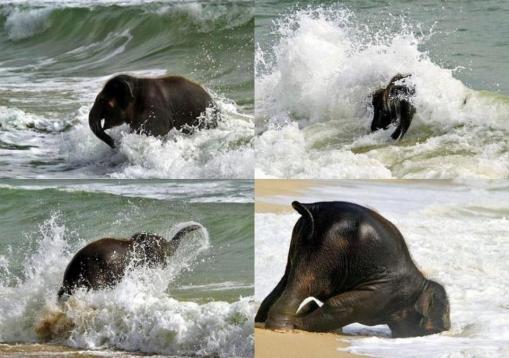 elefanten4