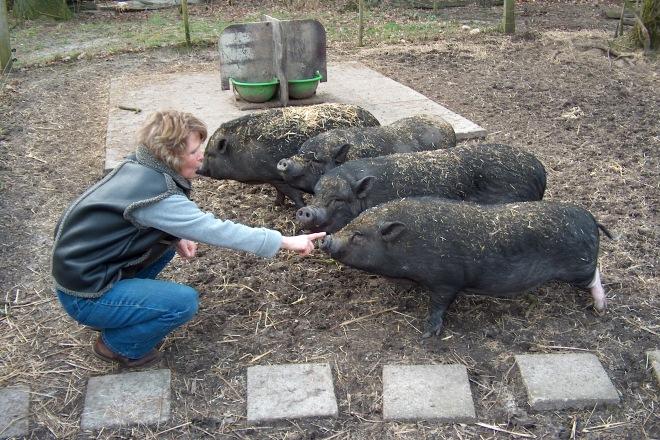 Die Schweine und ich