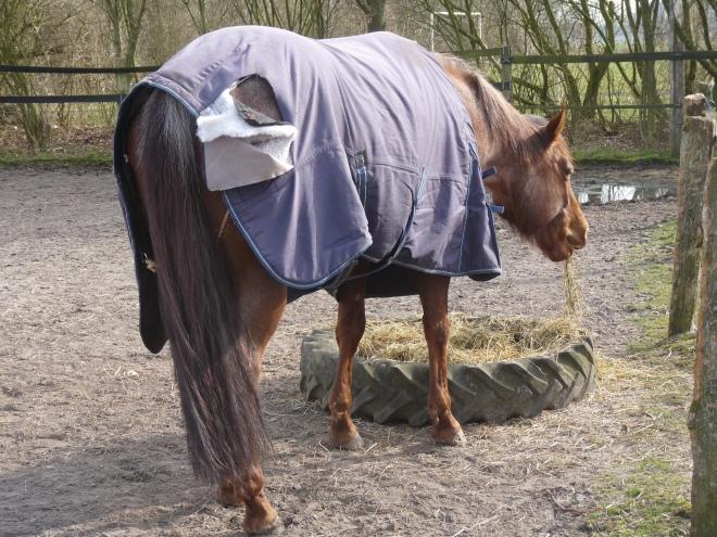 Pferdedecke kaput