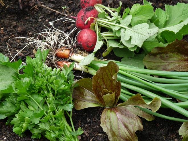 Salat und Kräuter