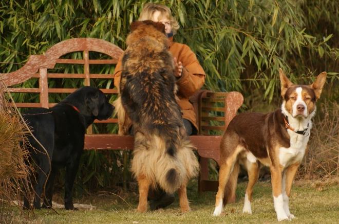 Hunde auf der Bank