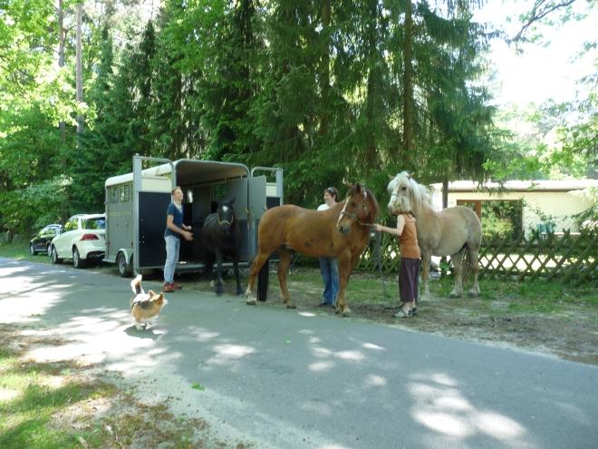 Pferde treffen ein