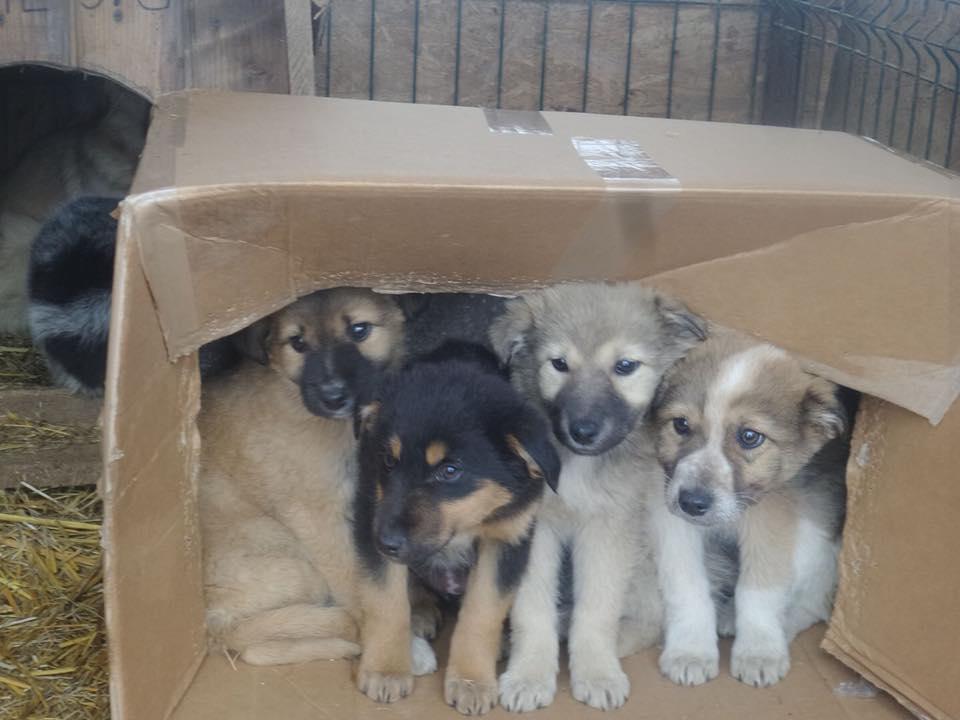Welpen in der Kiste