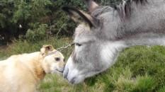 Paco und Esel